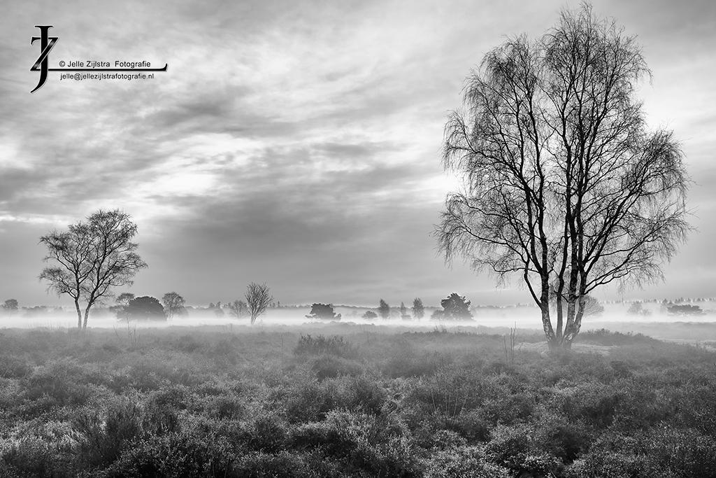 Groevenbeekse Heide - Winter 2011